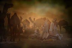 Caravane des chameaux au coucher du soleil dans le désert de sable Image libre de droits
