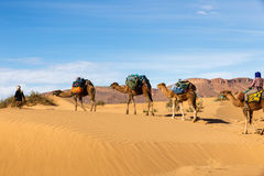 Caravane des chameaux dans le désert Photos stock