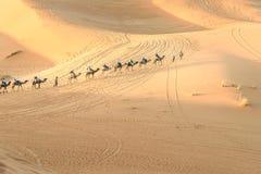 Caravane des chameaux en dunes de sable de Chebbi d'erg près de Merzouga, Maroc image libre de droits