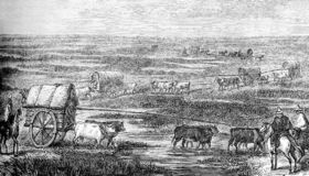 Caravans with cattle through the South America royalty free illustration