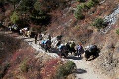 Caravans of yak Royalty Free Stock Photos