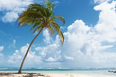 Caravelle beach, Saint Anne, Guadeloupe, French West Indies. Blue sky,coconuts trees, turquoise water and golden sand, Caravelle beach, Saint Anne, Guadeloupe royalty free stock photo