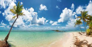 Caravelle beach, Saint Anne, Guadeloupe, French West Indies. Blue sky,coconuts trees, turquoise water and golden sand, panoramic view of Caravelle beach, Saint stock image