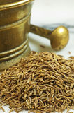 Caraway Stock Photography