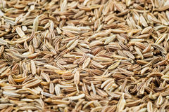 Caraway Royalty Free Stock Photo