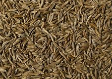 Caraway. Studio photo of dry no stamped spice Royalty Free Stock Photo