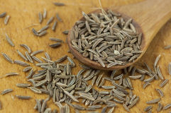 Caraway (Carum carvi) seeds Stock Image