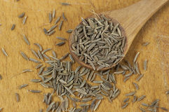 Caraway (Carum carvi) seeds Royalty Free Stock Images