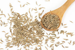 Caraway (Carum carvi) seeds Royalty Free Stock Photo