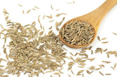 Caraway (Carum carvi) seeds Royalty Free Stock Photography