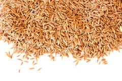 Caraway cumin seeds Royalty Free Stock Images
