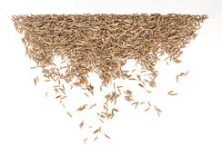 Caraway isolated on white background Stock Image