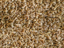 Caraway seamless  backgroung. Dry spice Indian cumin caraway seamless  backgroung Royalty Free Stock Photos