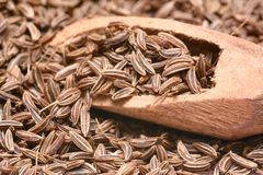 Caraway seed Royalty Free Stock Images