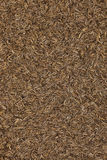 Caraway seeds Royalty Free Stock Image