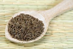 Caraway seeds Stock Images