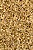 Caraway Seeds Stock Image