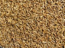 Caraway seeds background Royalty Free Stock Image