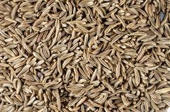 Caraway Seeds Royalty Free Stock Images