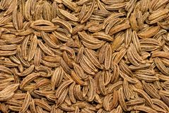 Caraway seeds grains. These spices often use in cookery and medicine Stock Photos