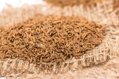 Caraway Royalty Free Stock Photography