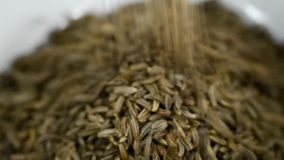 Caraway, spice and medicine stock video