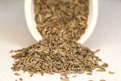 Caraway, spice and medicine Royalty Free Stock Photo