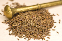 Caraway, spice and medicine Royalty Free Stock Photos