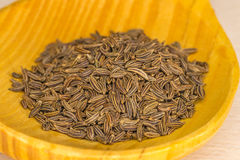 Caraway, spice and medicine Stock Images