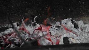 Carbón de leña, carbón ardiente en la parrilla, fuego almacen de metraje de vídeo