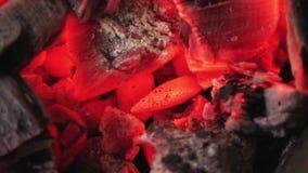 Carbón de leña que arde en horno almacen de video