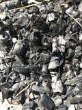 Carbón de madera extinto en el bosque fotos de archivo