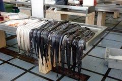 Carbón del Aphanopus, pez de cinto negro foto de archivo