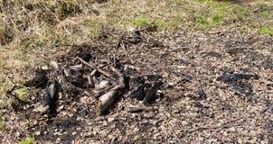 Carbón después de la hoguera apagada Imagen de archivo