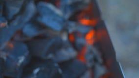 Carbón que quema en una parrilla del brasero almacen de video