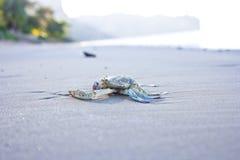 Carb na plaży Obrazy Stock