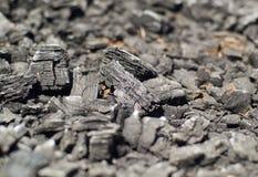 Carbón de leña de madera quemado Imagen de archivo libre de regalías