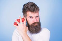 Carbohydrate content strawberry. Metabolic disease. Strawberries safest fruit for sugar levels. Man beard hipster. Strawberries fingers blue background. Mostly royalty free stock photos