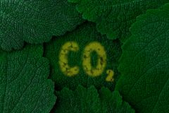 Carbon dioxide CO2. Dark green leaves background. Close up Stock Photos