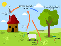 Carbon dioxide cycle Stock Photography