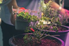 Co2 measuring device for measuring photosynthesis of plant growing with artificial led light. Carbon dioxide measuring device for measuring photosynthesis of stock photo
