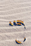 Carbon Footprint. Footprint in the sand with flames coming off of it Royalty Free Stock Photo