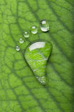 Carbon footprints on leaf Stock Photography