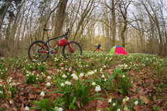 Carbon mountain bicycle among flowers Royalty Free Stock Photos