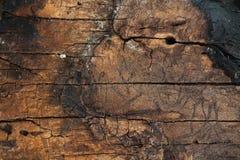 Carbone boscoso fotografia stock libera da diritti