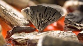 Carbone caldo d'ardore nella griglia Pit With Flames del BBQ Priorità bassa Burning dei carboni immagine stock libera da diritti
