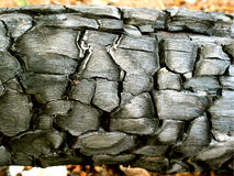 Carbone di legno Fotografie Stock Libere da Diritti