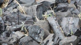 Carbone per il BBQ Fotografia Stock