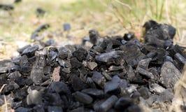Carbone su erba Immagini Stock