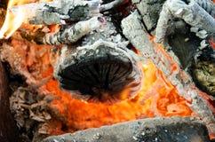 Carboni caldi dal legno bruciato Immagine Stock